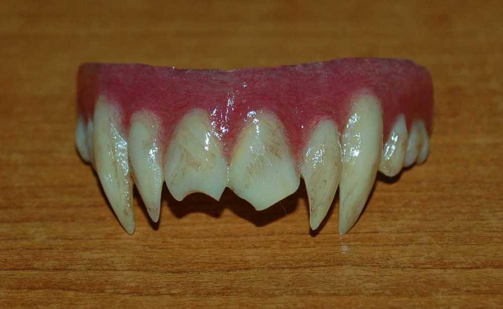 Как в домашних условиях сделать клыки как у вампира в домашних условиях
